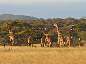 viaggio di nozze safari