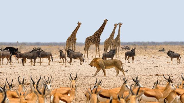 Namibia-animali
