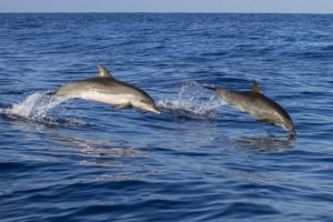 Delfini