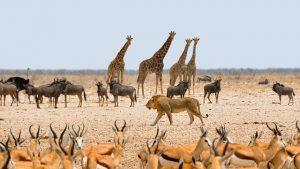 africa-animali