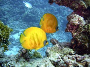 diving-egitto