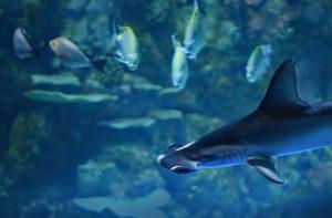 squalo-martello